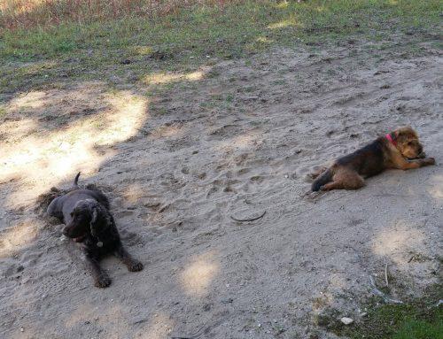 De Uitgelaten Hond wandelt ook in het weekend!