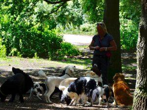 Honden Uitlaatservice Bussum